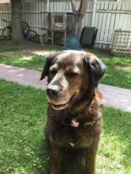 Roxy the family dog <3